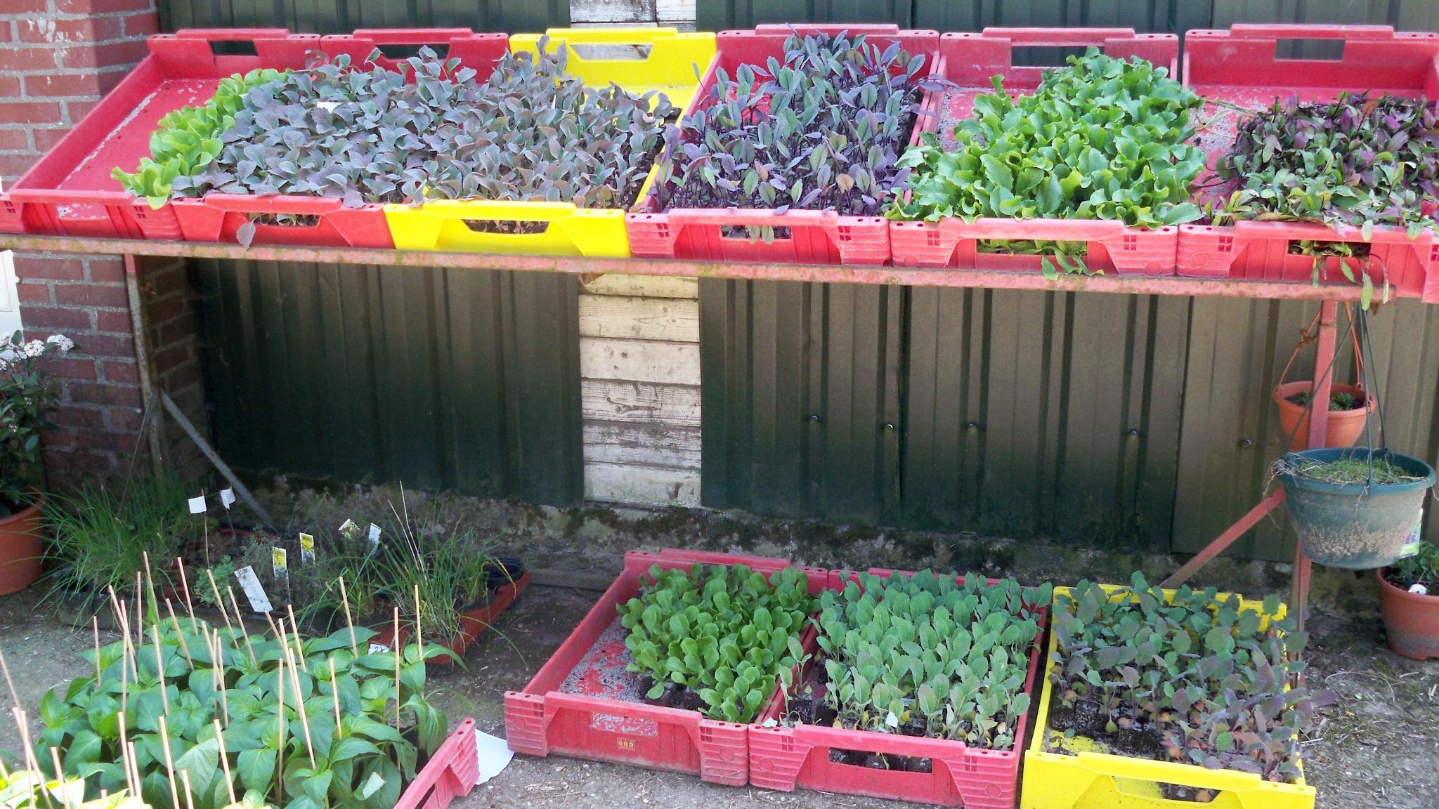 Groenten planten