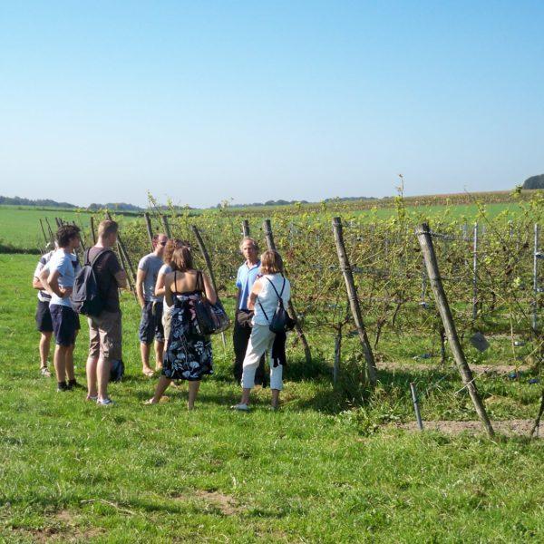 Rondleiding Wijngaard van Ditshuizen